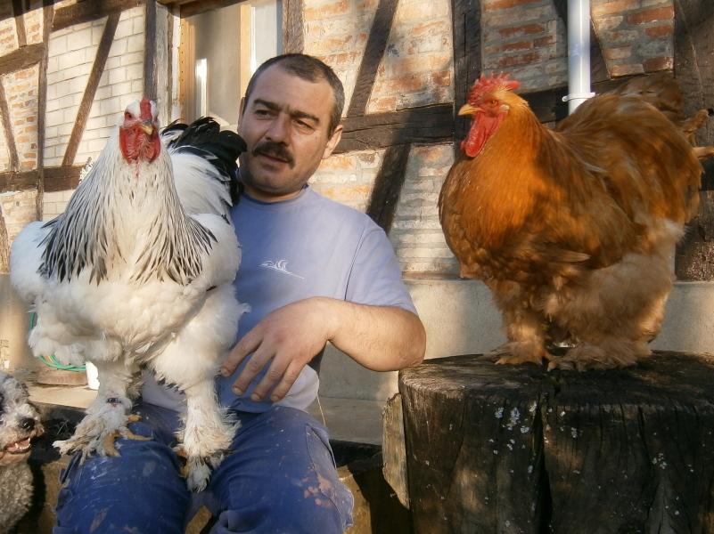 poule brahma a vendre en tunisie